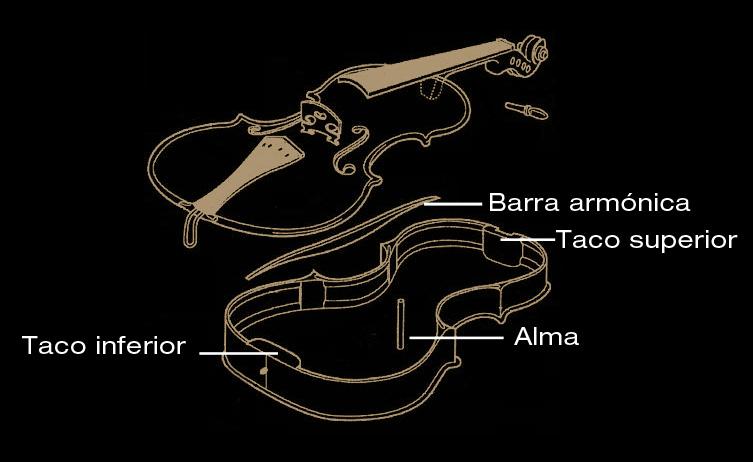 Anatomía de un violín